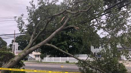 A downed tree is seen on the corner