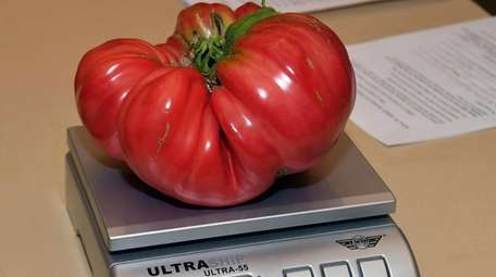 William Bouziotis' winning tomato tipped the scale at