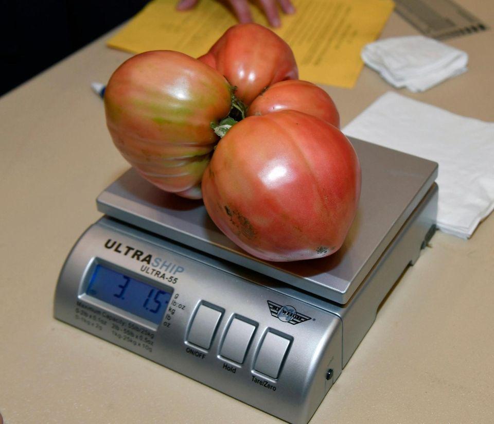 Vincenzo AbbatielloÕs tomato on the scale at Farmingdale