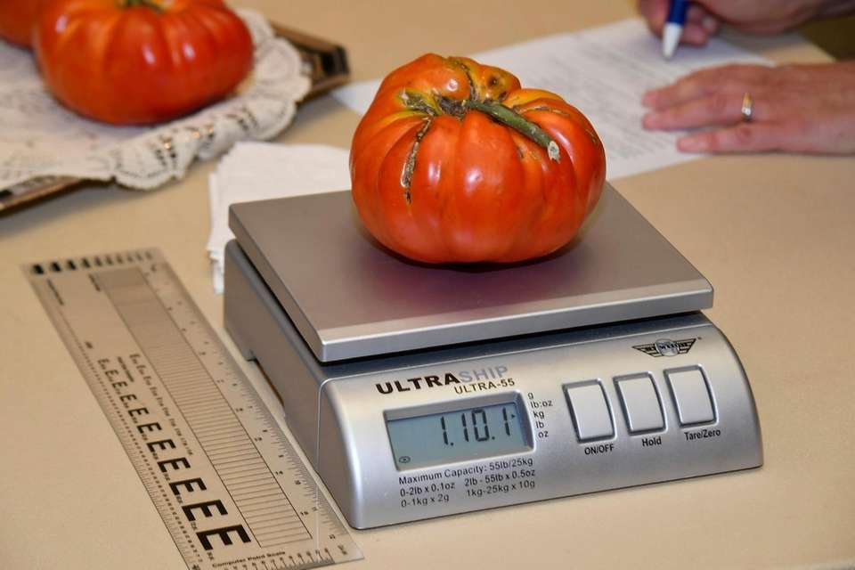 janet HartÕs tomato on the scale at Farmingdale