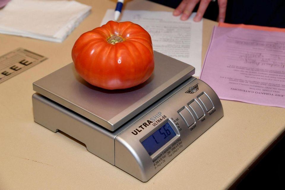 Kyle Freedman AvenaÕs tomato entry at Farmingdale State