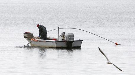 A bayman uses a rake to shellfish in