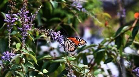 A butterfly alights near the National Museum of