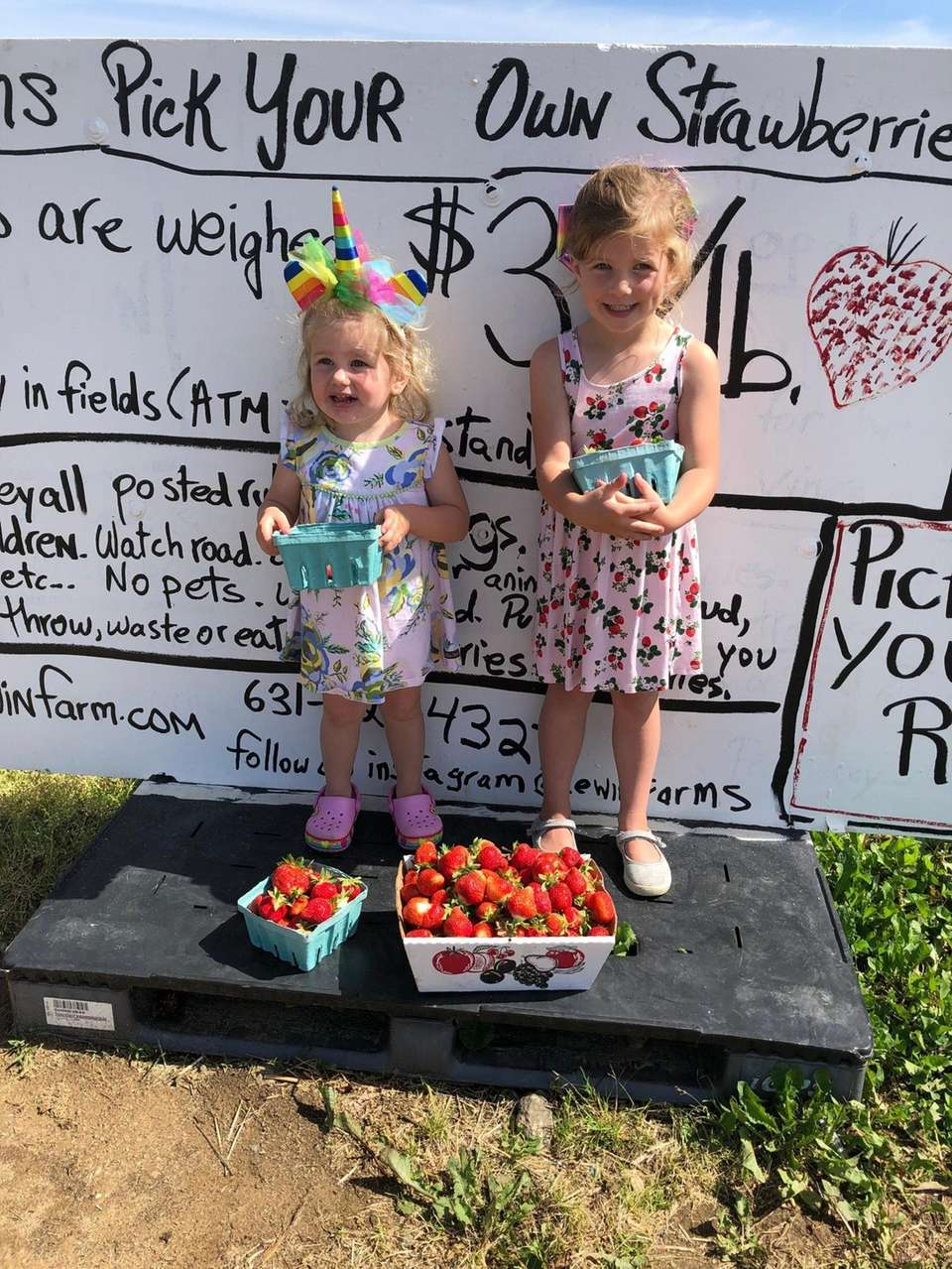 Madelyn and Abigail Sanders strawberry picking at Lewins