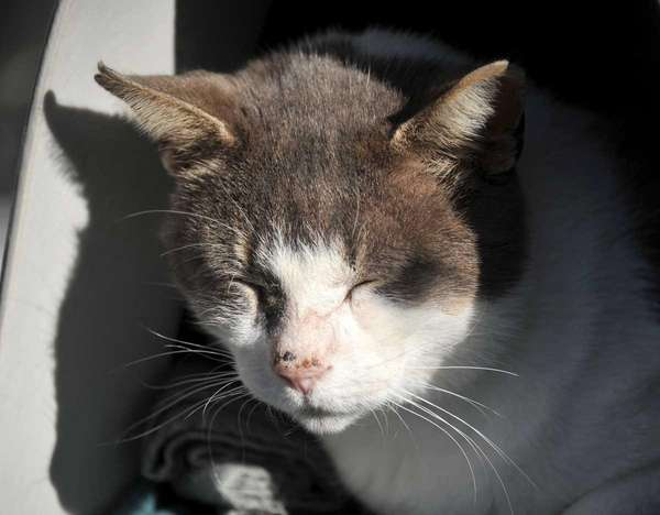 Ringtail, a 6-year old American shorthair, has found