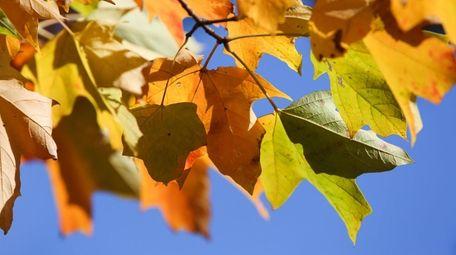 The autumn foliage awaits leaf peepers seeking to