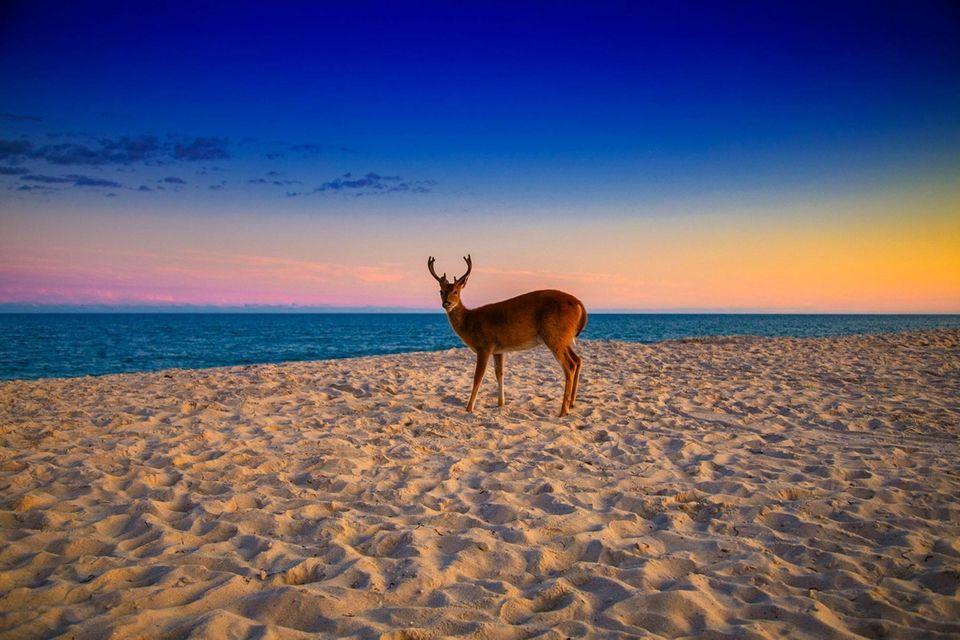 Davis Park - Fire Island, New York Last