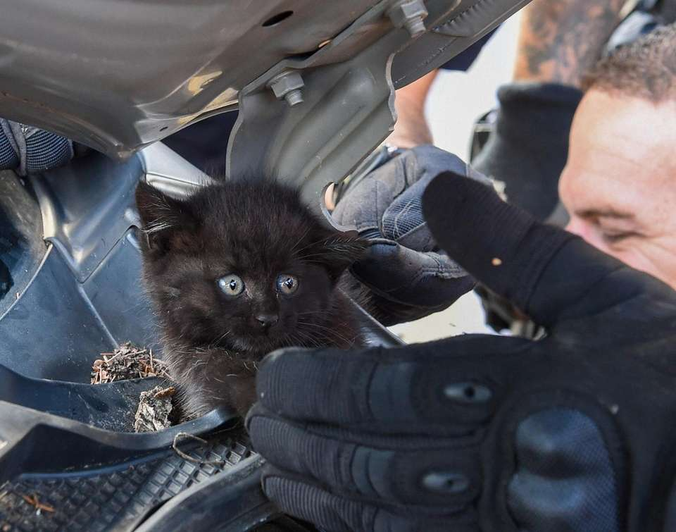 Suffolk County police officers rescue a kitten after