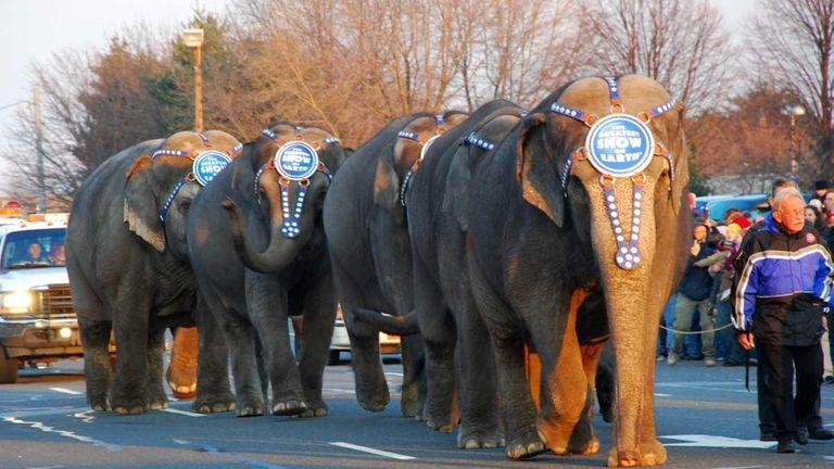 Circus animals parade Monday night   Newsday