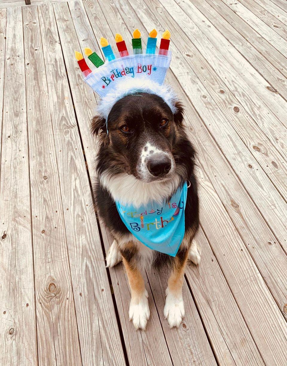 Otto enjoys his 6th birthday in style.
