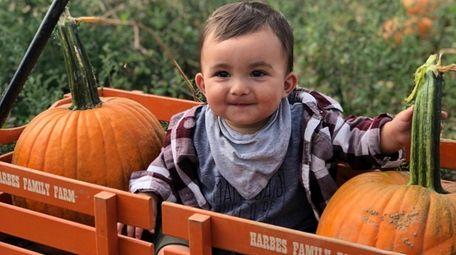 Wolfgang pumpkin picking at Harbes Family Farm in
