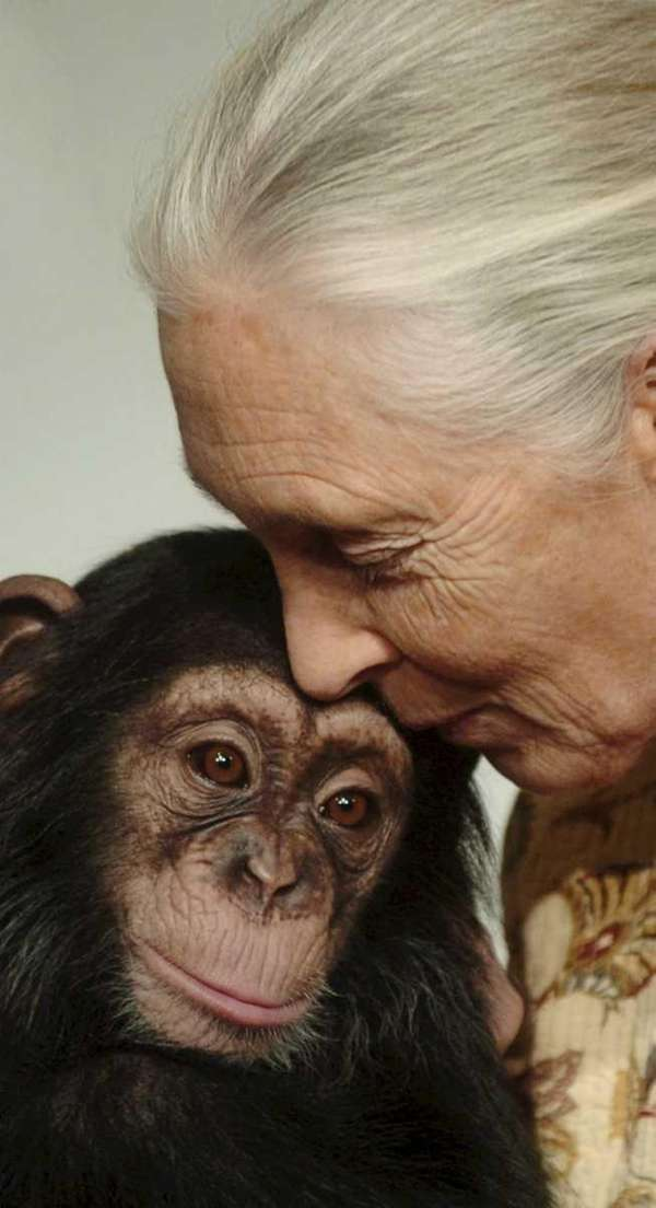 Jane Goodall, British ethologist, kisses Pola, a 14-months-old