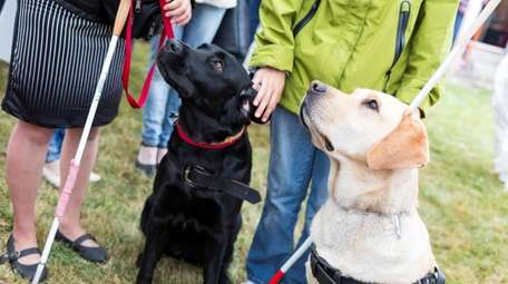 Wherever you live, there is a Guide Dog
