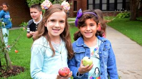Eastport Elementary School students harvested apples earlier this
