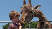 Feed a giraffe at the Long Island Game