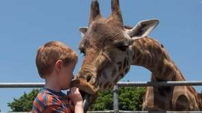 Feed a giraffe at the Long Island Game