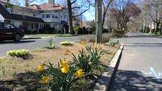 Pictured is Commonwealth Avenue in the Village of