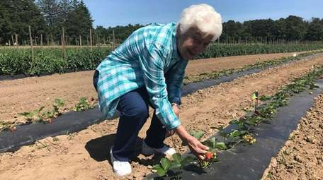 Sister Clara Santoro, 87, picking strawberries at Thera