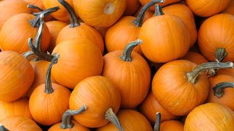 A pile of pumpkins on display at a