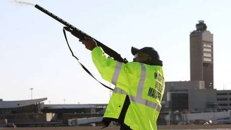 A wildlife technician fires a non-lethal pyrotechnic round