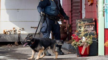 A Suffolk police dog at a crime scene