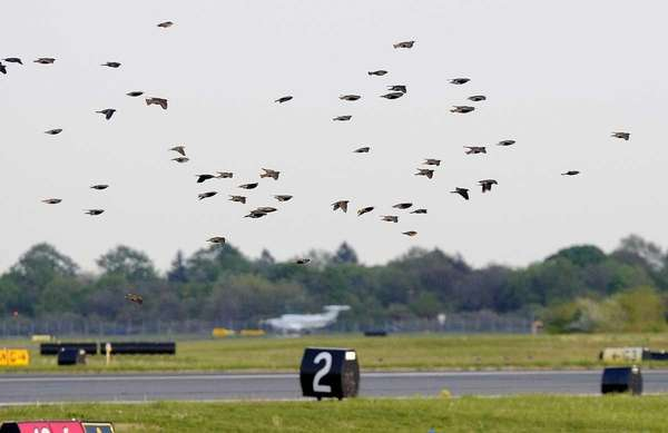 A large flock takes flight over an active