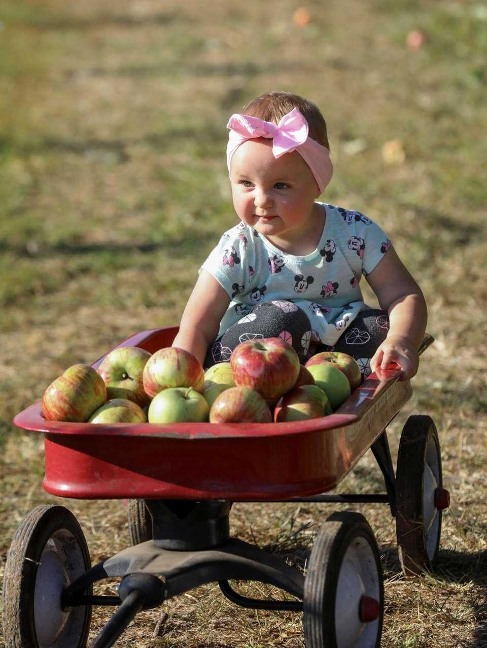 Sixteen-month-old Emily Gosek, of Copiague, is enthralled by