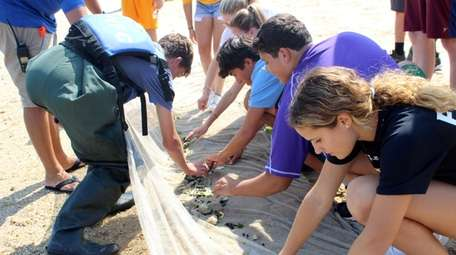 Students from Oyster Bay High School examine marine