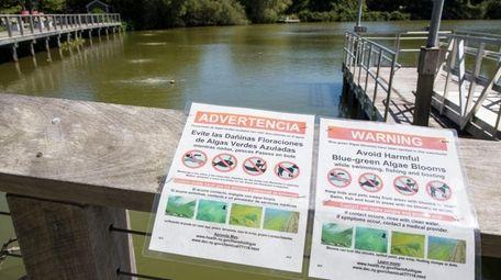 Toxic blue-green algae has been found in Southampton
