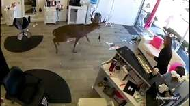 A deer crashed through a window at Be.you.tiful