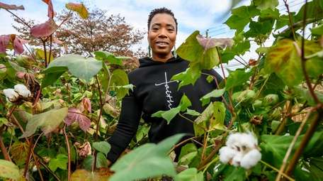 Gloria Cassell is growing cotton at the Roosevelt