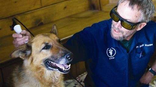Veterinarian Scott Warden uses laser therapy treatment on