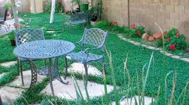 Clover is an economical and environmentally friendly, low-maintenance