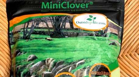 Plan now for planting clover in the spring.