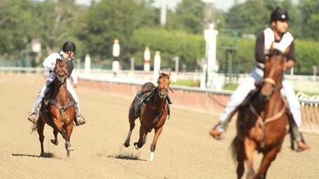 A horse runs loose after throwing its jockey