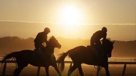 Horses train at Belmont Park. (June 6, 2012)