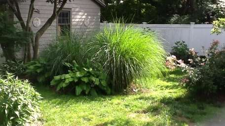 Ornamental grasses, roses, hostas and other perennials in