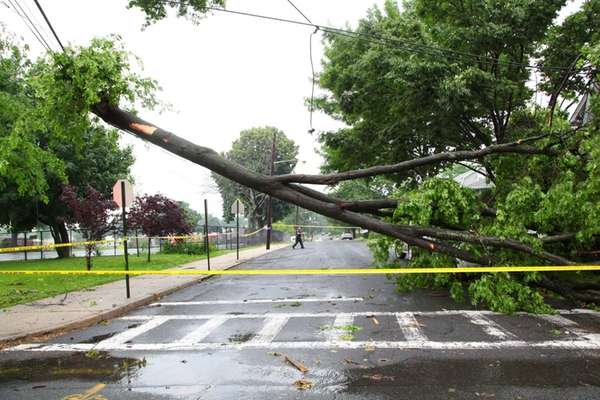A downed tree with wires blocks Roslyn Avenue