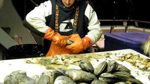 Mark Williams shucks surf clams in Montauk Harbor.