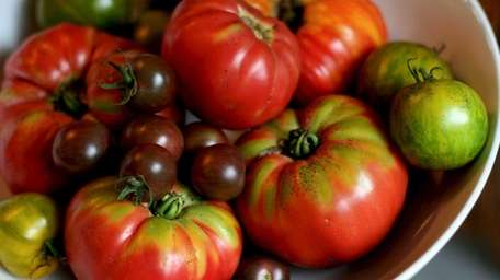Freshly harvested heirloom tomatoes rest in a bowl