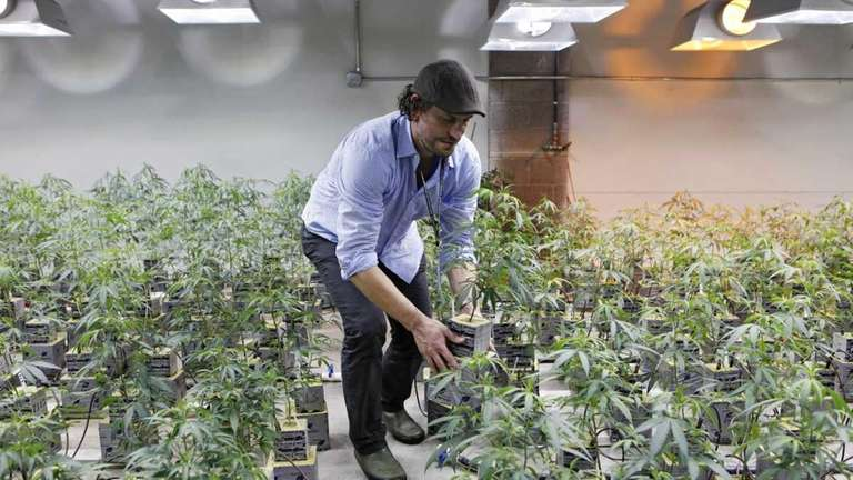 Matthew Huron, owner of two medical marijuana dispensaries