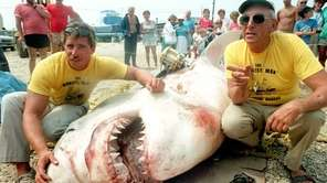 A 3,450-pound great white shark nicknamed Big Guy