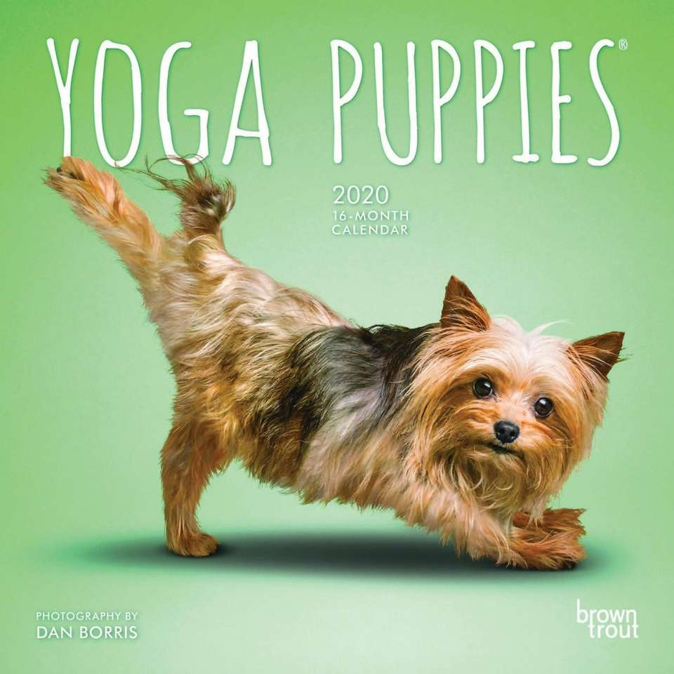 Decorate your desk with an adorable yoga puppies