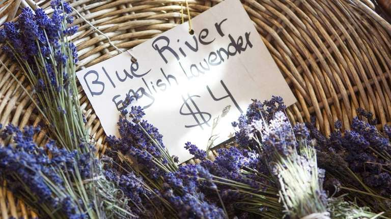 Pick your own lavender on the East End | Newsday