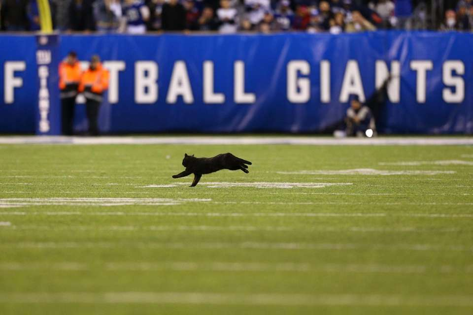A black cat runs onto the field during