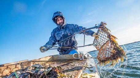 Anthony Rispoli hauls in scallops on Peconic Bay
