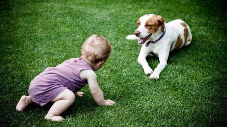 A baby plays with the dog on the