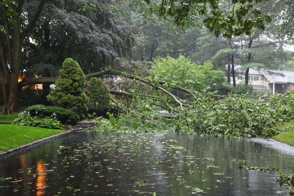 A downed tree blocks Fir Drive in East
