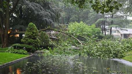 A downed tree blocks Fir Drive in East