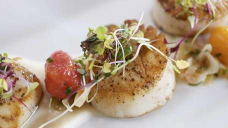Nocturne's pan-seared scallops, served with a cauliflower puree